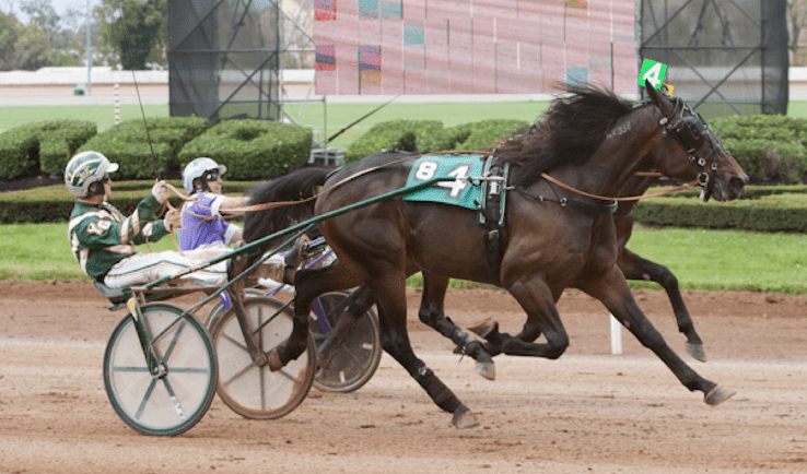 Pinkman is a threat in the 2015 Hambletonian