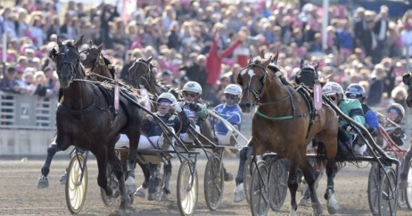 Nuncio and Örjan Kihlström (left) took the lead with 100 meters to go, and held off his U.S. counterpart Resolve at the wire to win the Elitlopp on Sunday at Solvalla   Kanal75