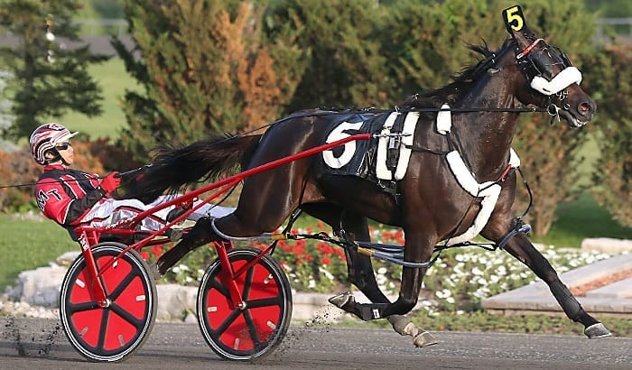 Wiggle It Jiggleit (Montrell Teague, file photo) has now won 10 of 15 starts this year and 33 of 42 lifetime | New Image Media