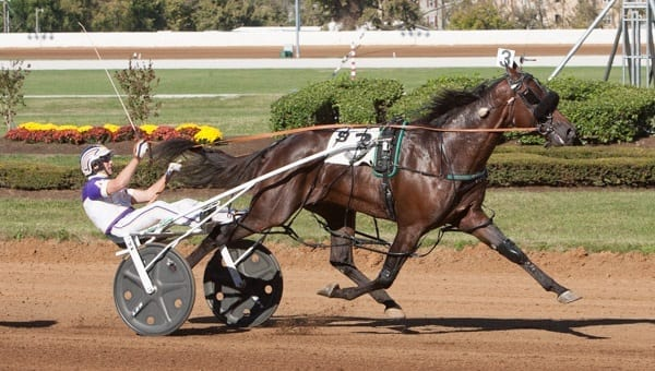 Always B Miki and David Miller recorded the fastest mile in harness racing history when they won the $138,000 Allerage Farms open pace Saturday at Red Mile in 1:46. | Nigel Soult