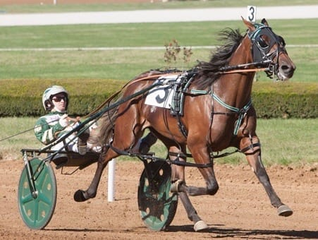 Trainer Jimmy Takter is expecting big things out of the 2016 Dan Patch and O'Brien Award winner Idyllic Beach (Yannick Gingras) | Nigel Soult