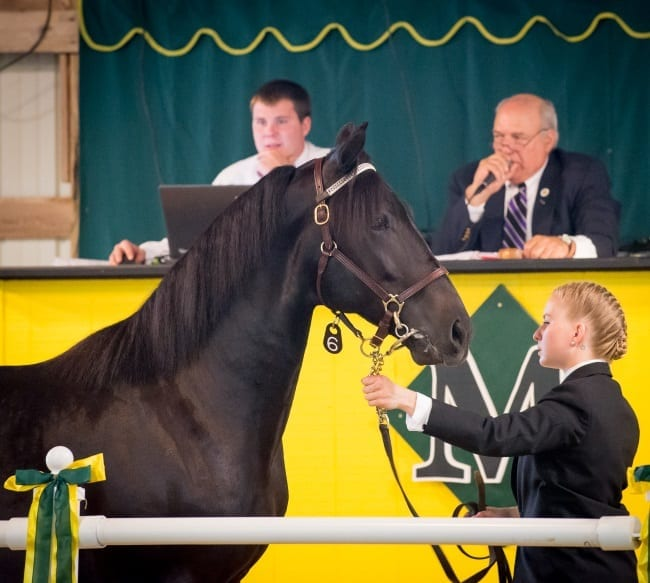 The Morrisville Yearling Sale supports the equine program at Morrisville State College | Courtesy Morrisville