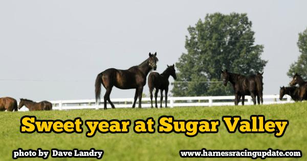 Sweet year at Sugar Valley