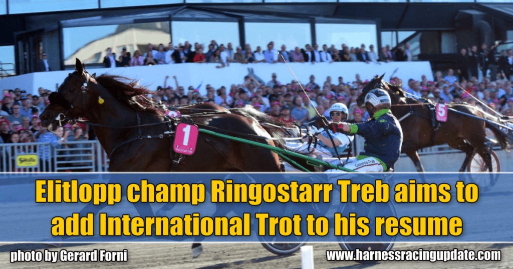 Elitlopp champ Ringostarr Treb aims to add International Trot to his resume
