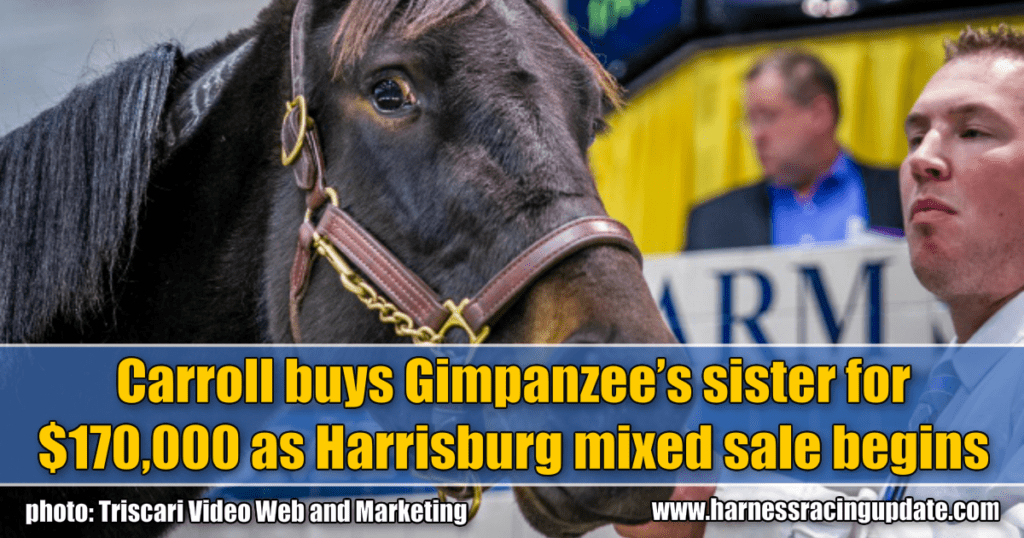 Carroll buys Gimpanzee's sister for $170,000 as Harrisburg mixed sale begins