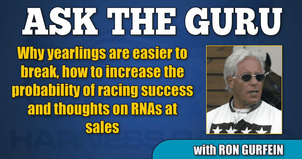 Why yearlings are easier to break, how to increase the probability of racing success and thoughts on RNAs at sales