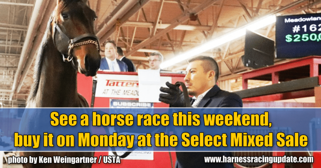 See a horse race this weekend, buy it on Monday at the Select Mixed Sale