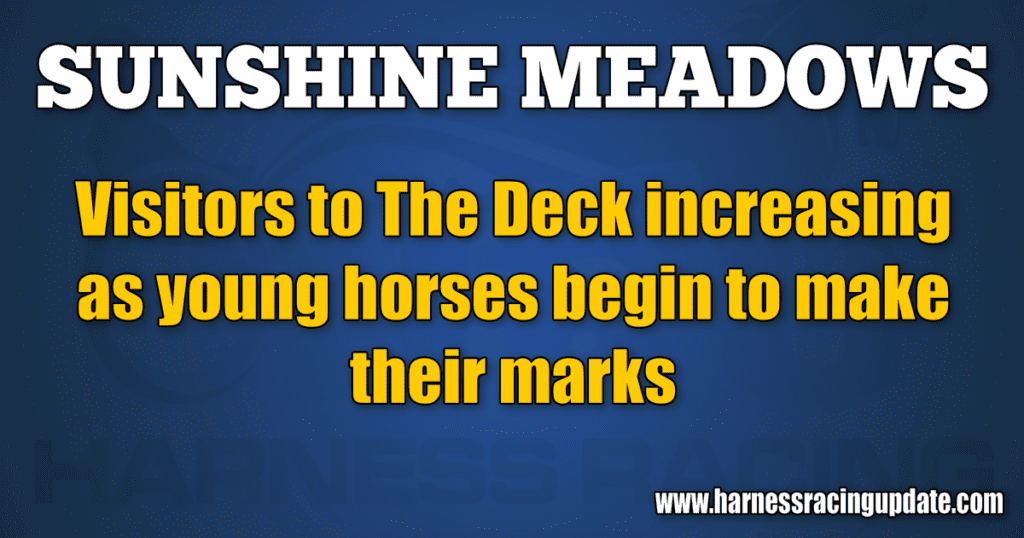 Visitors to The Deck increasing as young horses begin to make their marks