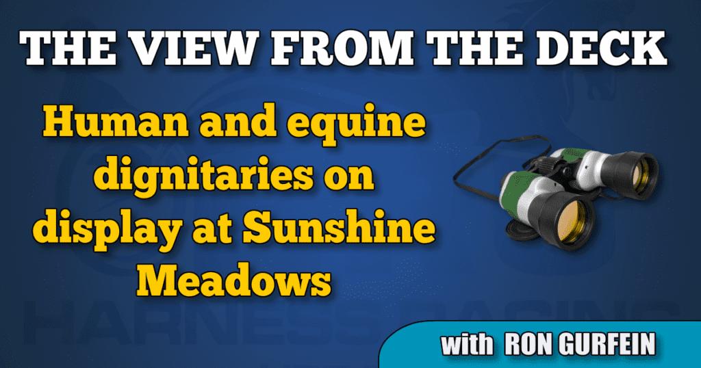 Human and equine dignitaries on display at Sunshine Meadows