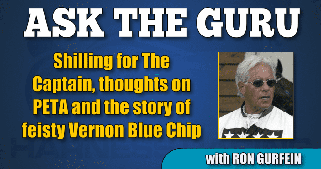 Shilling for The Captain, thoughts on PETA and the story of feisty Vernon Blue Chip