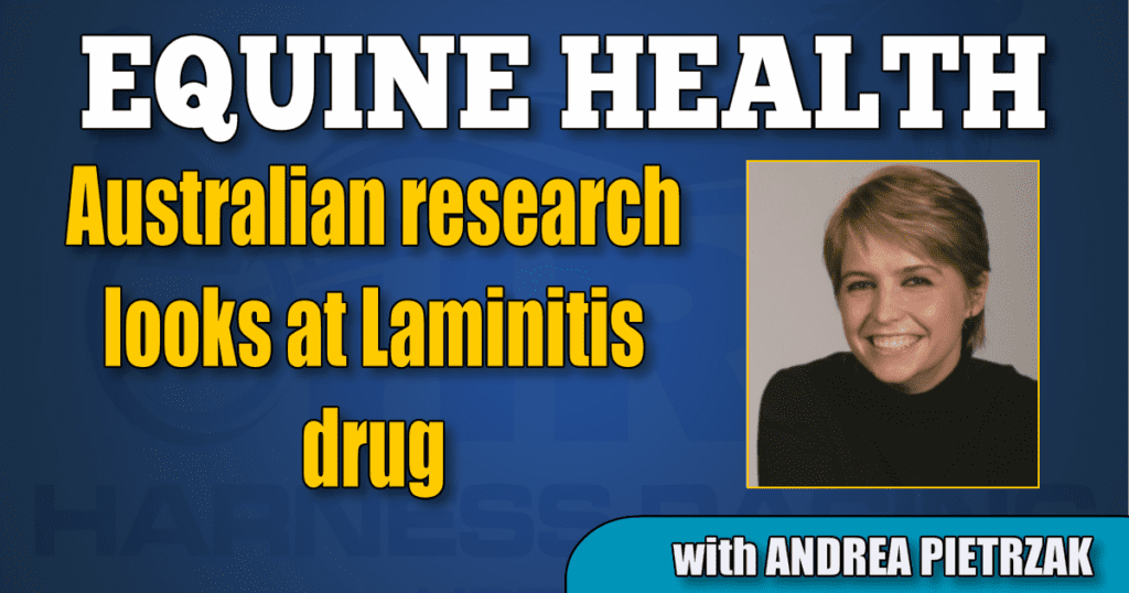 Australian research looks at Laminitis drug