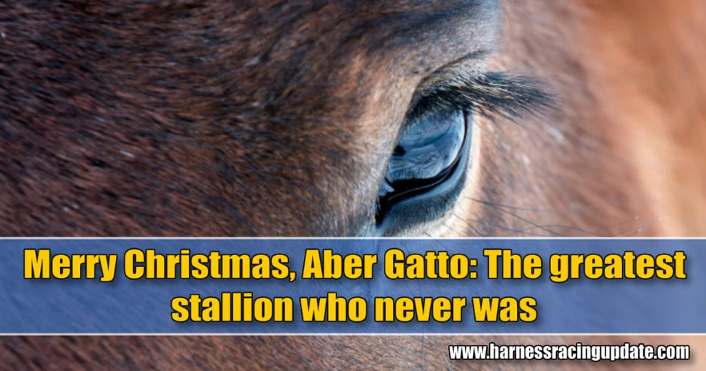 Merry Christmas, Aber Gatto: The greatest stallion who never was